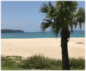 沖縄 美ら海 サンウッドビーピー