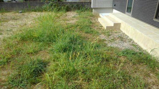 草刈り前 外溝